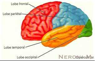 Neoplasie Cerebrali